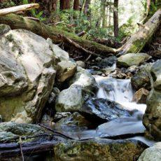 Mystischer Wald mit Bachlauf - Bildtankstelle.de