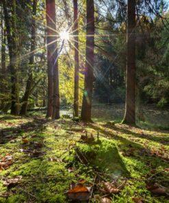 lichter Herbstwald im Gegenlicht, Saarland - Bildtankstelle.de
