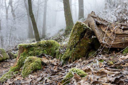 Winterstimmung im Wald, Saarland - Bildtankstelle.de