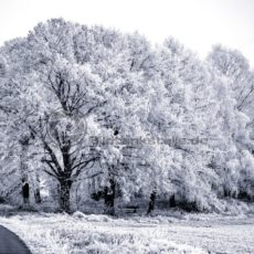 traumhafter Winterwald, Saarland - Bildtankstelle.de