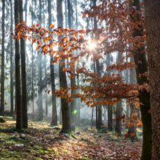 Märchenwald im Gegenlicht, Saarland - Bildtankstelle.de