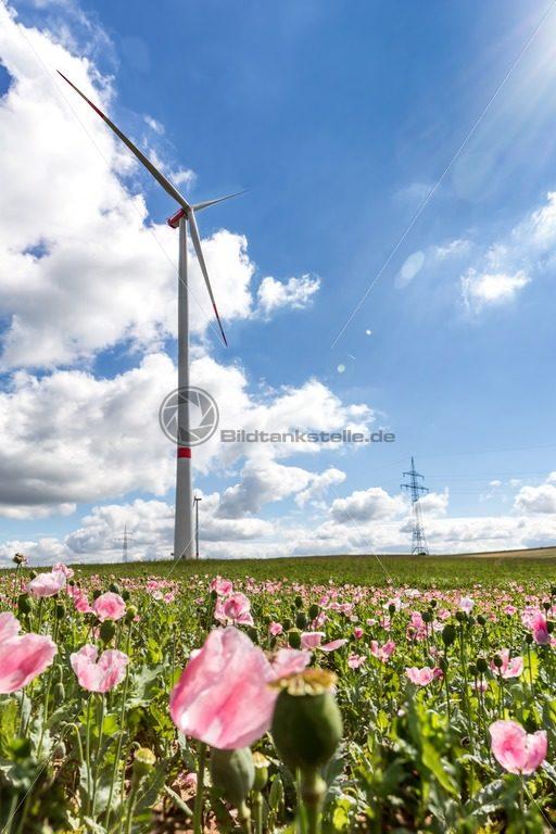Windrad in blühendem Mohnfeld bei Schwarzenacker, Nähe Homburg, Saarland - Bildtankstelle.de - Bilddatenbank für Foto-Motive aus SAAR-LOR-LUX