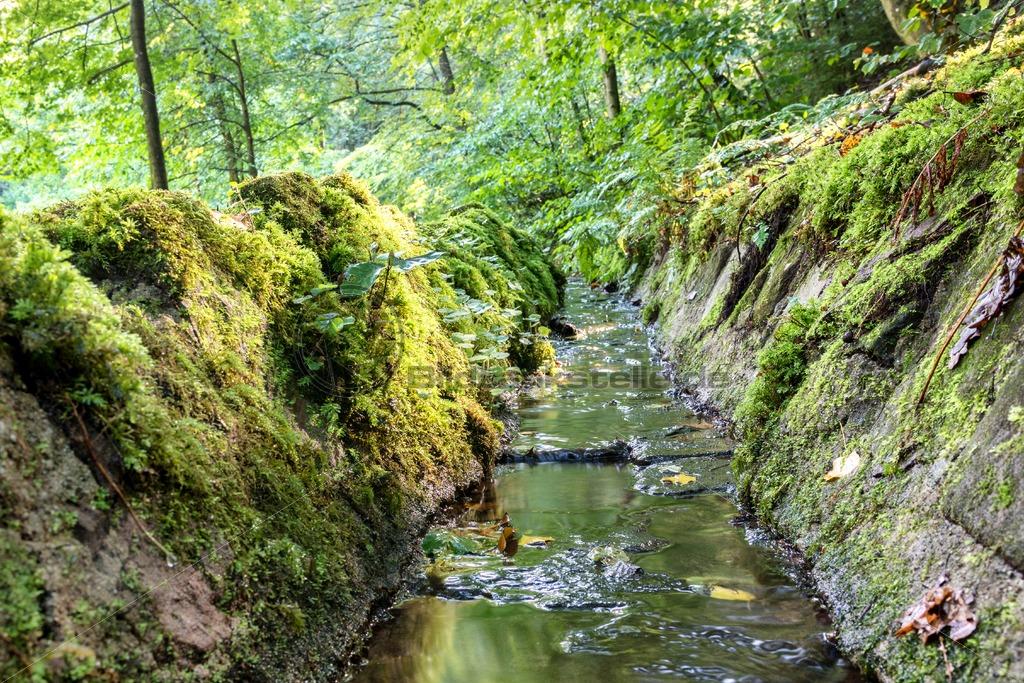 zartes Rinnsal von der Karlsbergquelle zum Karlsbergweiher, Nähe Homburg, Saarland - Bildtankstelle.de - Bilddatenbank für Foto-Motive aus SAAR-LOR-LUX