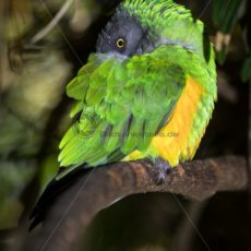bunte Vogelwelt in Südafrika - Bildtankstelle.de