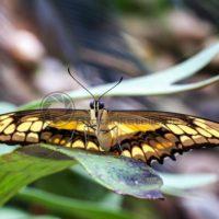 bunter Schmetterling auf grünem Blattwerk, Fotokunst für Home und Office - Bildtankstelle.de