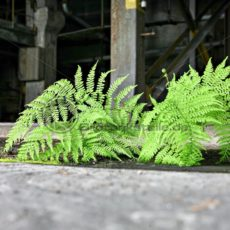 grüner Farnwedel auf rissigem Betonboden - Bildtankstelle.de