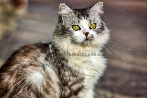 mein Freund, meine Katze - Bildtankstelle.de
