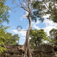 verwunschene Tempelanlage in Angkor Wat: Blickfang-Motive für Zuhause, Praxis, Büro, Hotel - Bildtankstelle.de