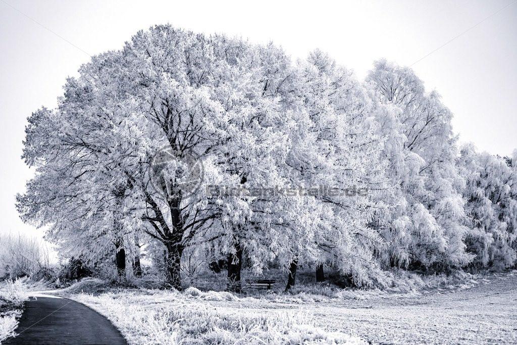 traumhafter Winterwald in schwarzweiß, Saarland - Bildtankstelle.de