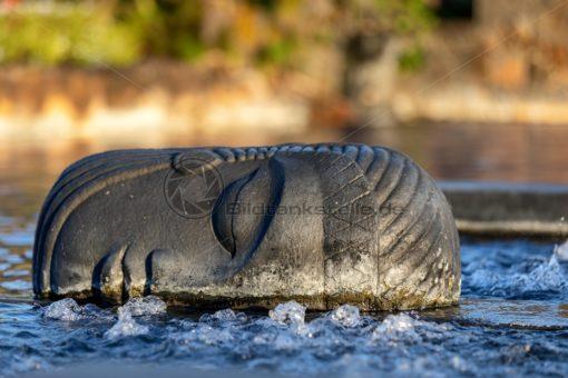 Buddhakopf im Wasser - Bildtankstelle.de