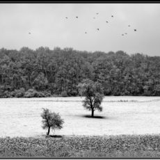 Winterlandschaft in schwarz-weiß - Bildtankstelle.de